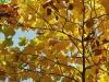 Goldenen Herbst